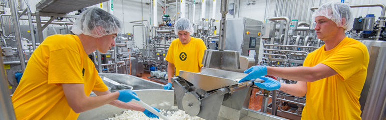 Dairy Manufacturing Students milling cheese
