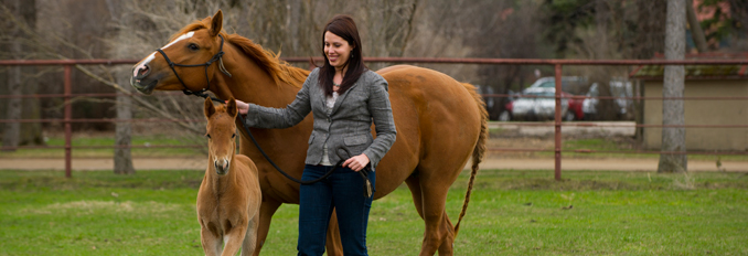 Professor Rebecca Bott works with a horse and foal.