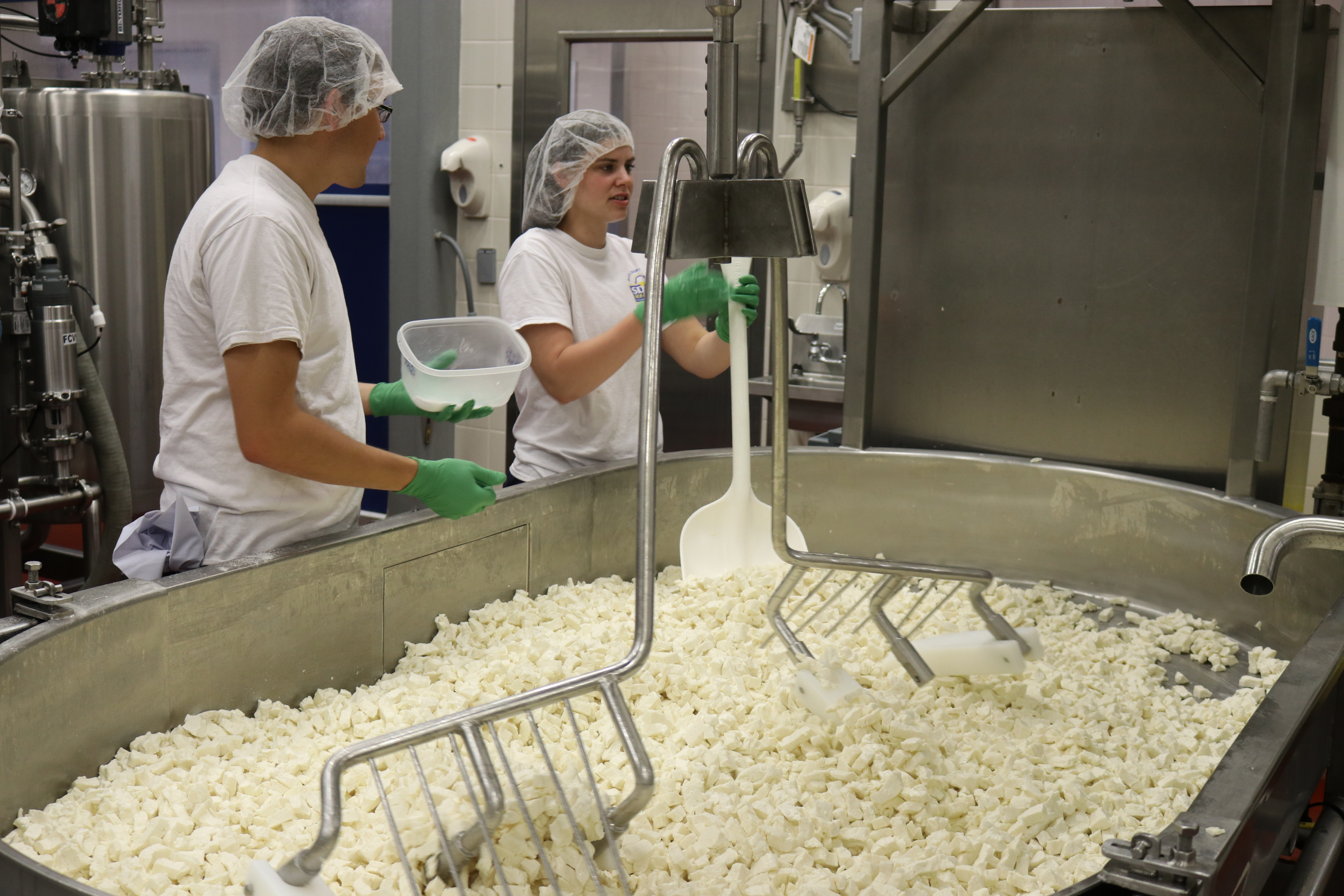SDSU Davis Dairy Plant cheese making