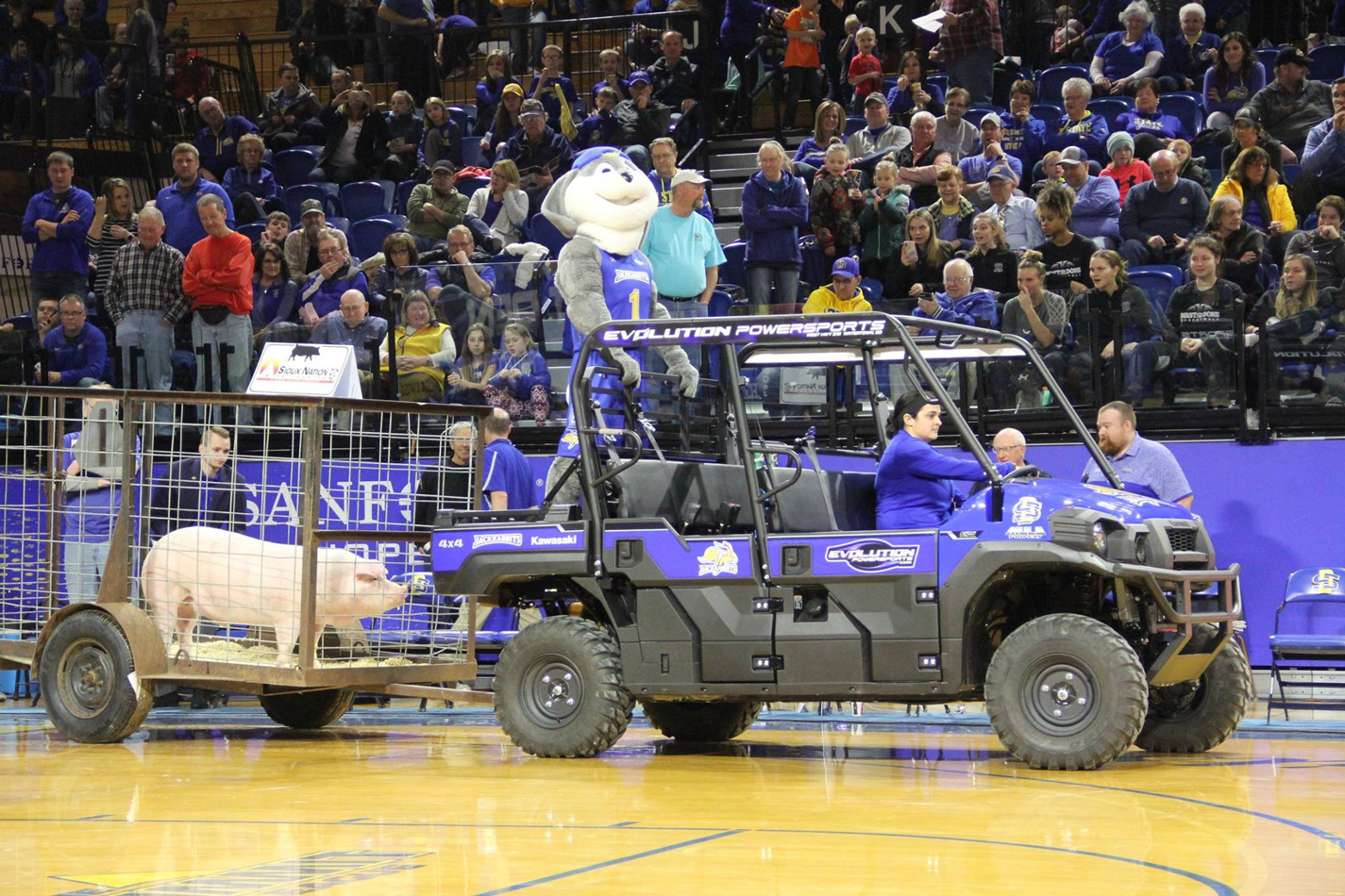 Live hog being auctioned in Frost Arena