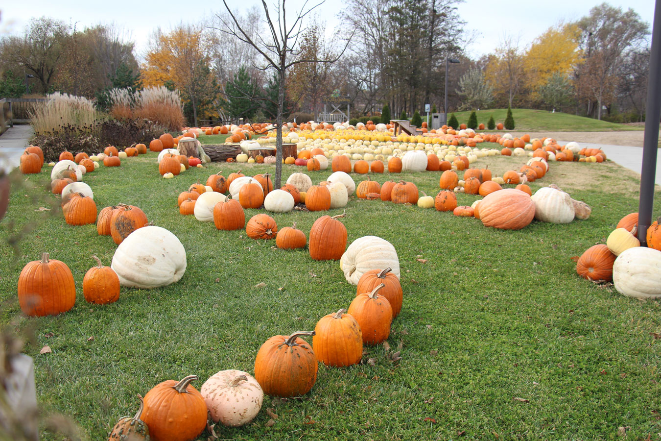 pumpkins at McCrory Gardens