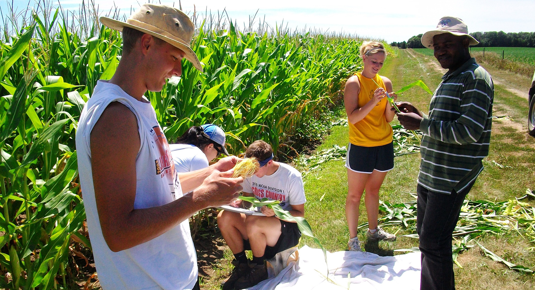 Corn crew for web page