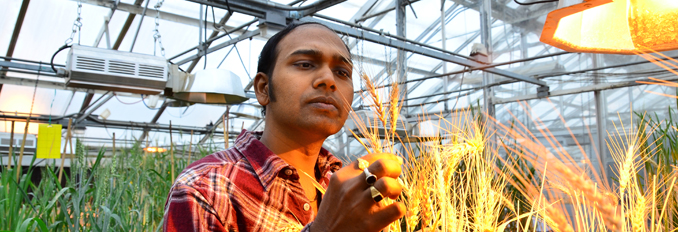 Plant Science Student Examining Wheat
