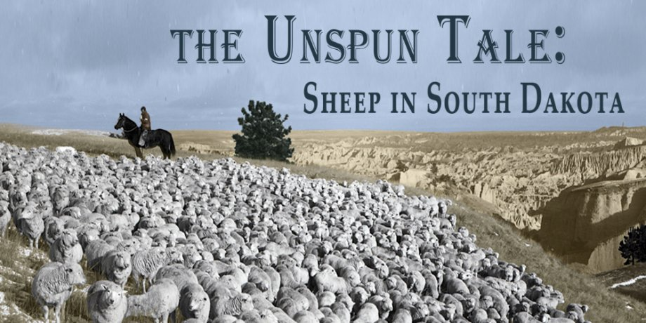 The Unspun Tale: Sheep in South Dakota