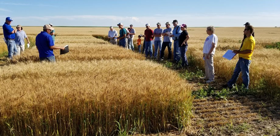 Sehgal giving wheat tour in Selby, SD