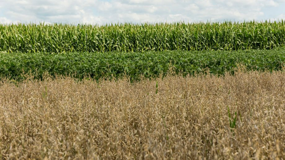 corn, soybeans and oat growing in plots near Beresford