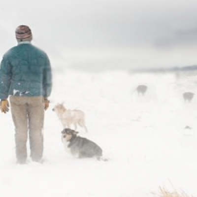 Man with Dogs in Blizzard