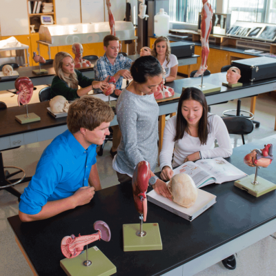 students and professor working in anatomy lab.