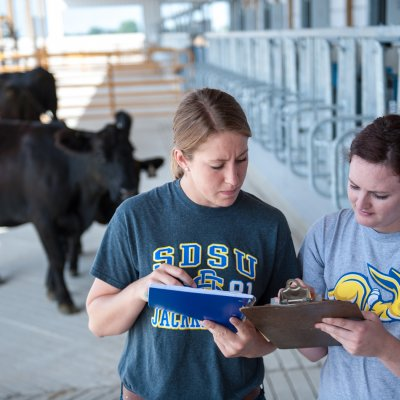 students looking at notebooks in cattle feedlot