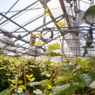 Plants in the greenhouse
