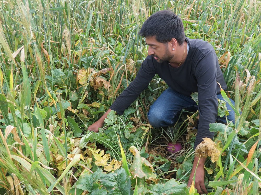 Kunal Sood and cover crops