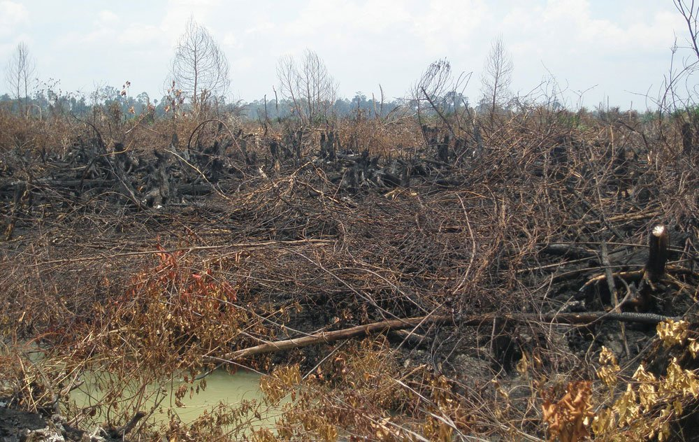 Burned area in peat swamp forest