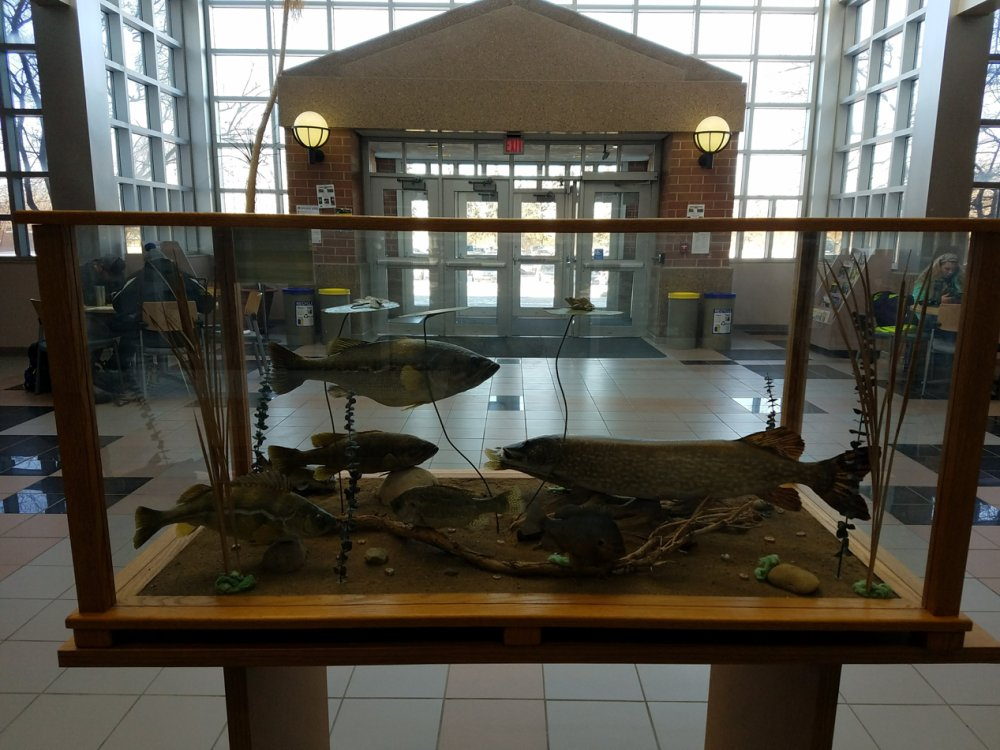 Taxidermy Fish in Atrium