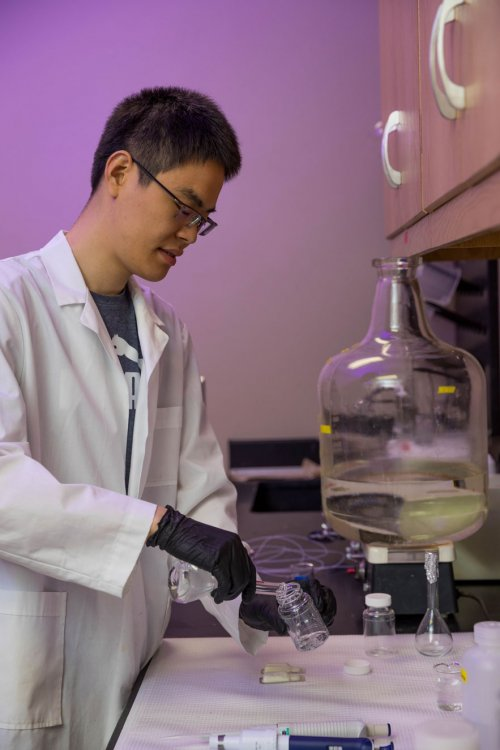 Peng Dai preparing solutions with E. coli