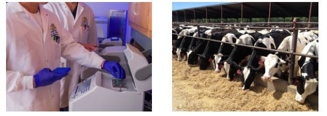 Improving the Detection of Bovine Respiratory Disease Pathogens: New PCR Panels Available