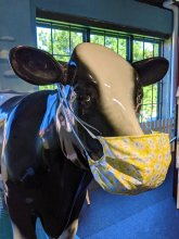 Daisy the Dairy Cow from the South Dakota Agricultural Heritage Museum's Ag-Xploration Gallery is ready to greet visitors.