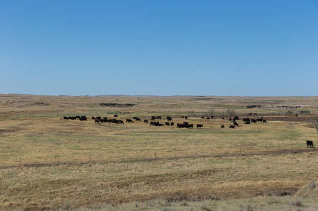 Antelope Range and Livestock Research Station