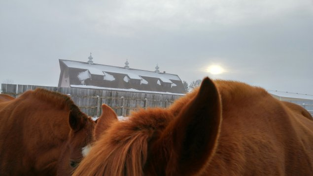 Horses and snow at the Horse Unit