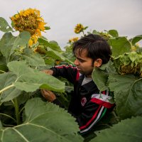 Krisha Ghimire in sunflower field.