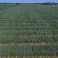 Winter wheat Breeding Trials at Brookings, SD
